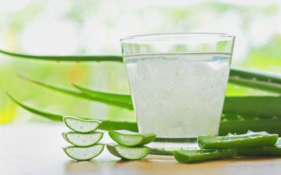 Raw Aloe Vera |  7 Health Powerful Health Benefits